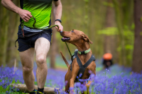 Top ten tips for taking part in a canicross event